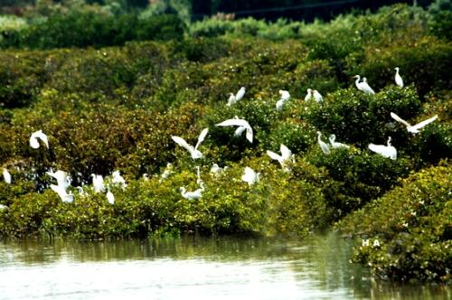 湛江红树林国家级自然保护区